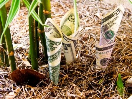 Money_-_growth_-_eknarin